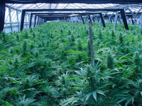 Feds-May-Deny-Water-to-Washington-Marijuana-Growers-280x210